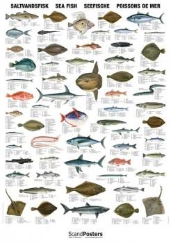NaturplakatSaltvandsfisk-20