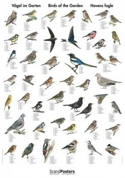 NaturplakatHavensfugle-20