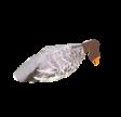 Sillosocks Grågås Vindpose Lokkefugl
